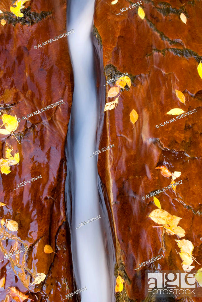 Stock Photo: Water flowing through a crack in the red sandstone slickrock, Left Fork of North Creek, Zion National Park. Utah, USA.