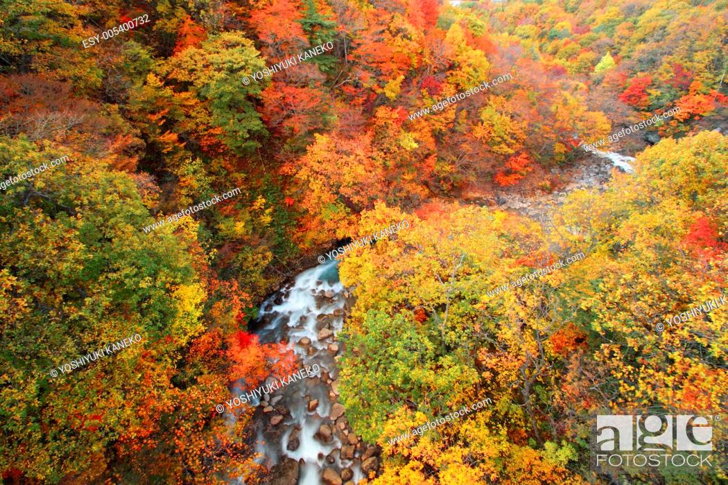 Stock Photo: colorful leaves in Gully Matsukawa.