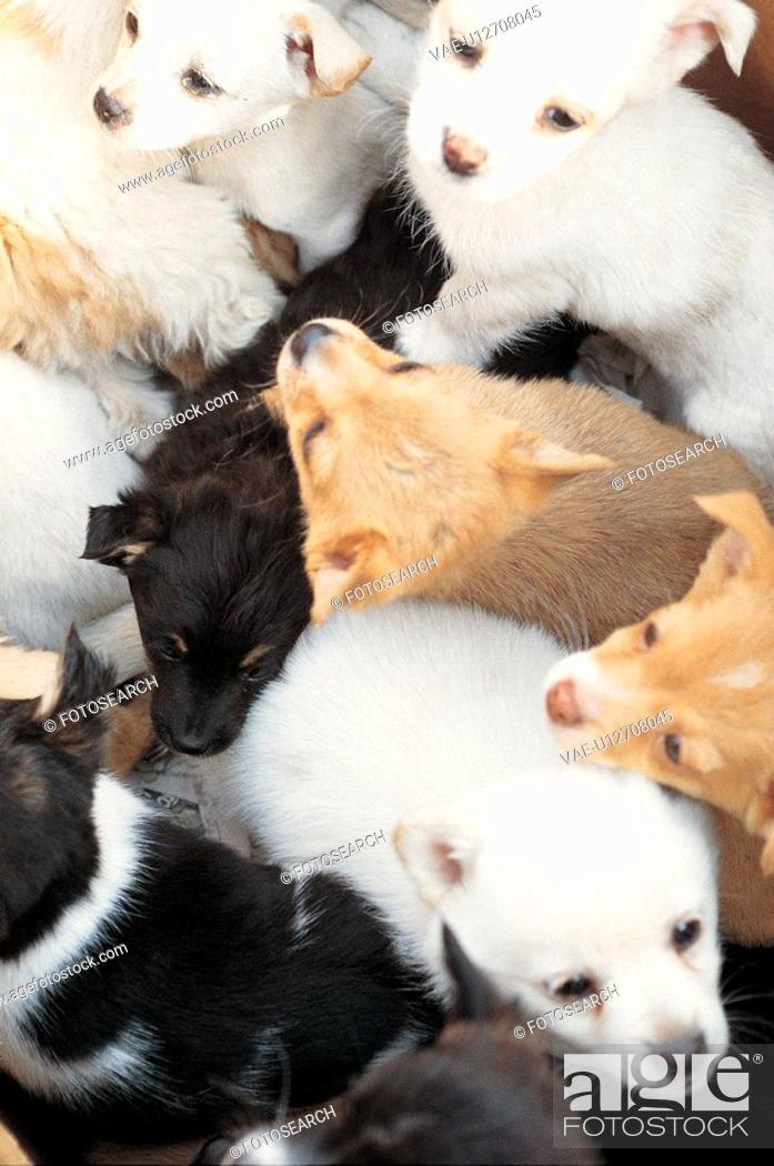 Stock Photo: numerous, dog, canines, domestic, animal, many, pup.