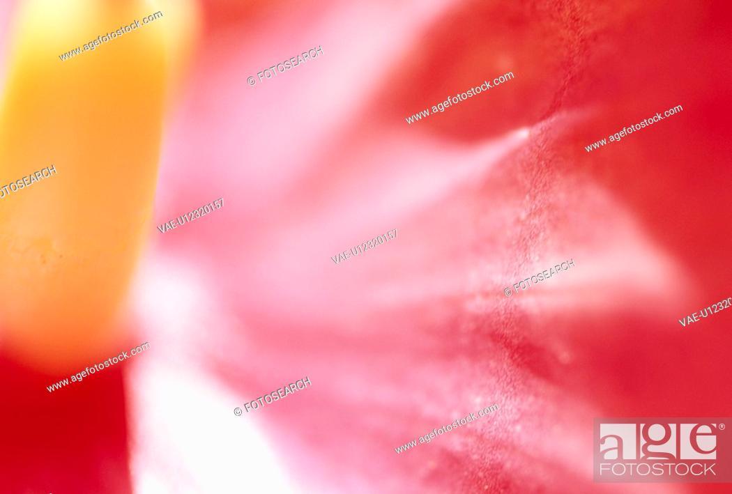 Stock Photo: Flower Rise.