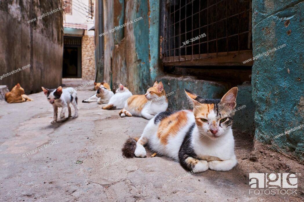 Stock Photo: Kenya, Lamu island, Lamu town, Unesco world heritage, street cats.