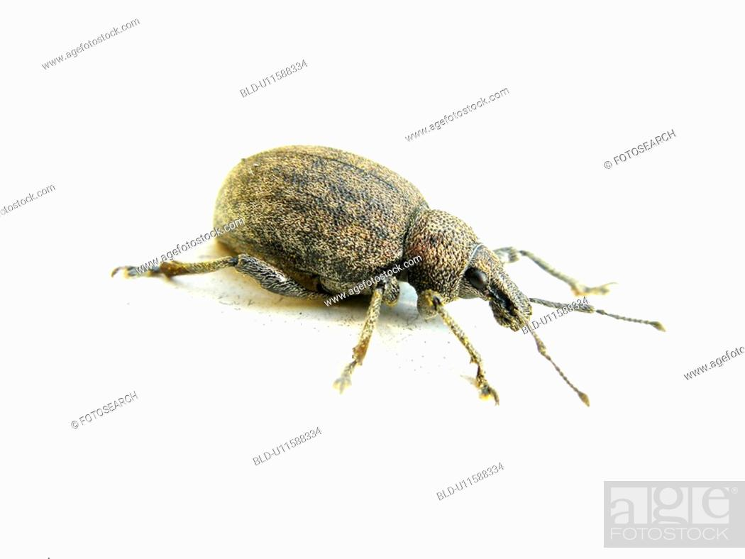Stock Photo: animals, CLOSE, beetle, Austria, alfred.