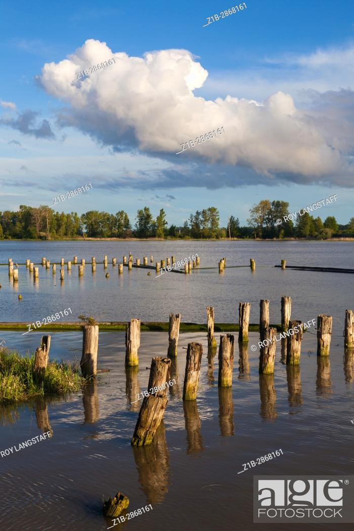 Stock Photo: Wooden pilings of long gone fish caneries on the banks of the Fraser River in Vancouver.