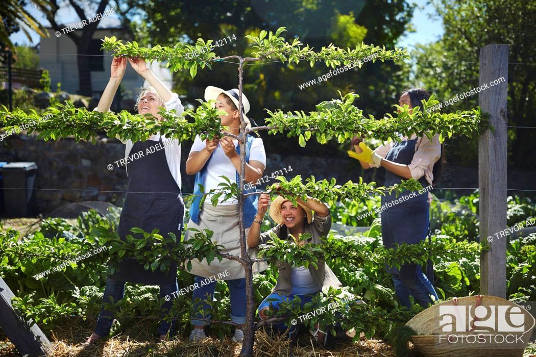 Imagen: Women working in sunny vegetable garden.