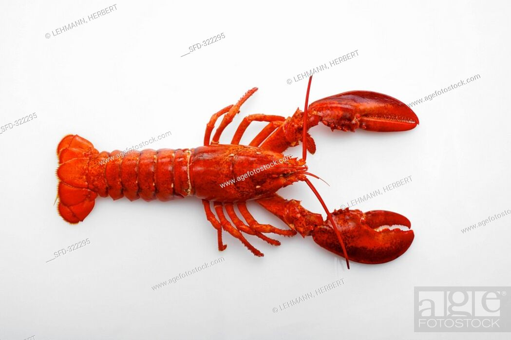 Stock Photo: A lobster on a white surface.