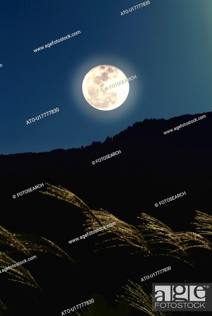 Imagen: The full moon and silver grass, low angle view, Shiga prefecture, Japan.