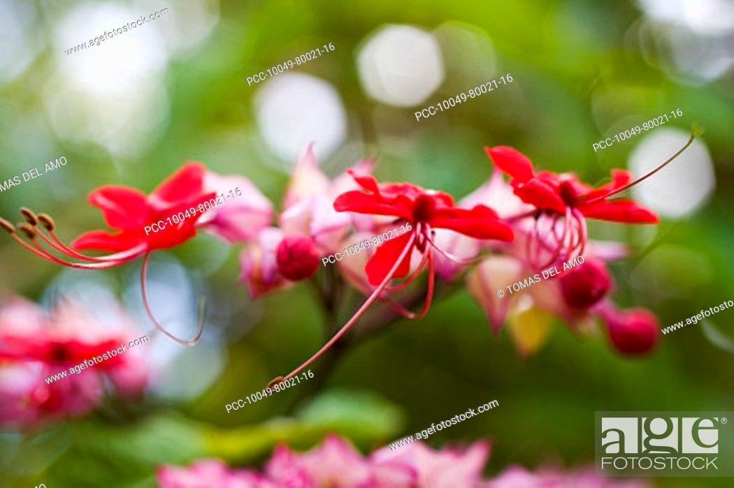 Stock Photo: Close-up of bright pink flowers in amongst green blur of plants.
