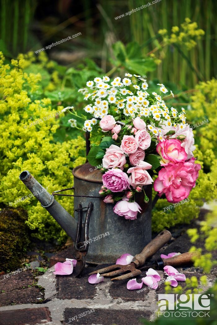 Stock Photo: Old weathered metal watering can and garden hand tools on garden path, filled with cut flower Roses and Daises.