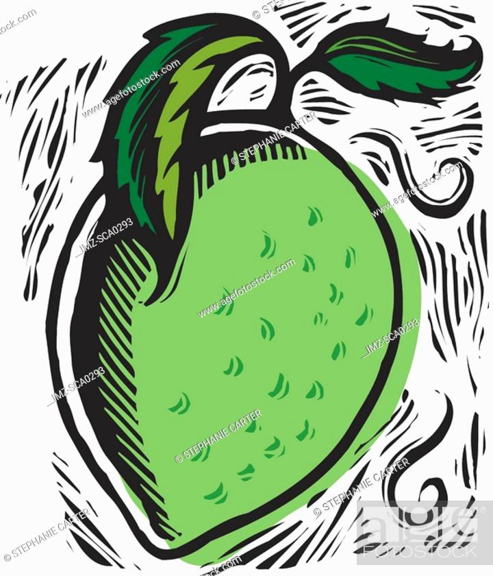 Stock Photo: ripe lime.