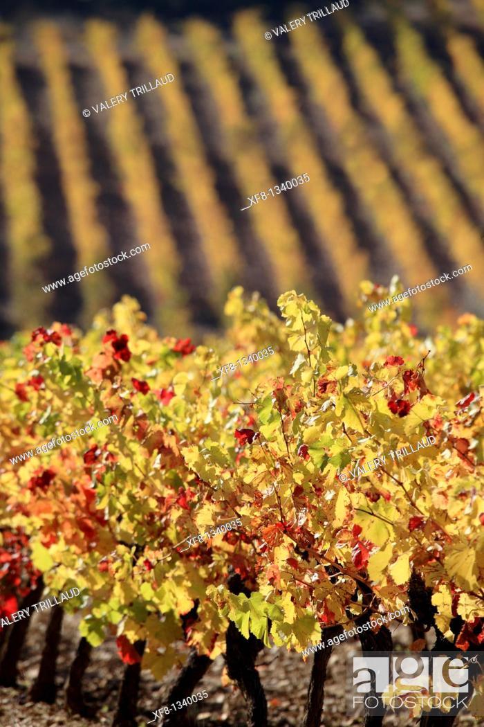 Stock Photo: Vineyards of the Luberon Vaucluse 84 PACA France.