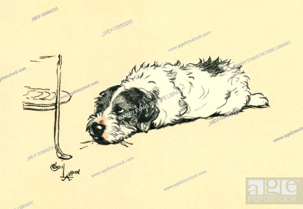 Stock Photo Illustration By Cecil Aldin A Sealyham Terrier Known As The Blighter