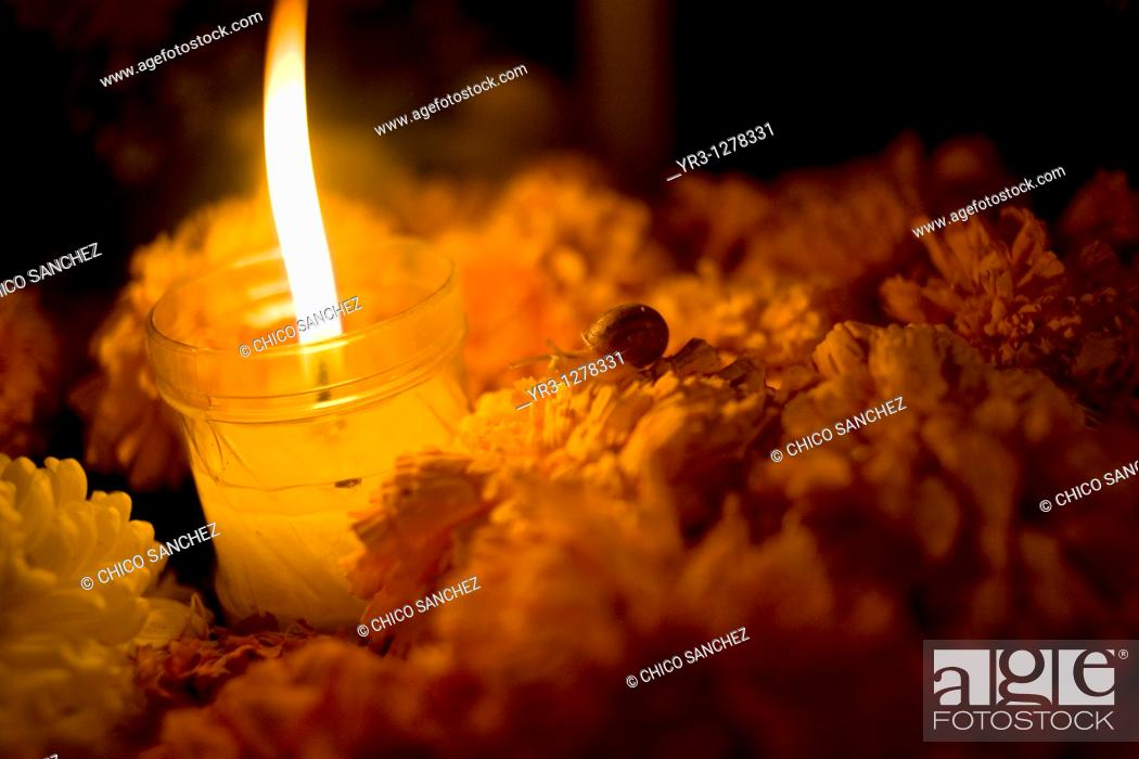 Stock Photo: A snail crawls on yellow marigold flowers, known as Zempasuchitl, on a tomb decorated with a candle at the cemetery in San Gregorio Atlapulco, Xochimilco.