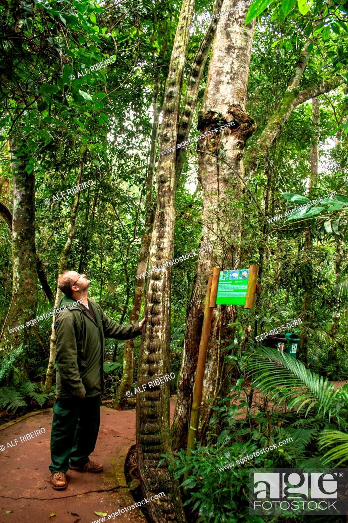 Stock Photo: Parks birds; Foz do Iguaçu; PR; Paraná; Brazil.
