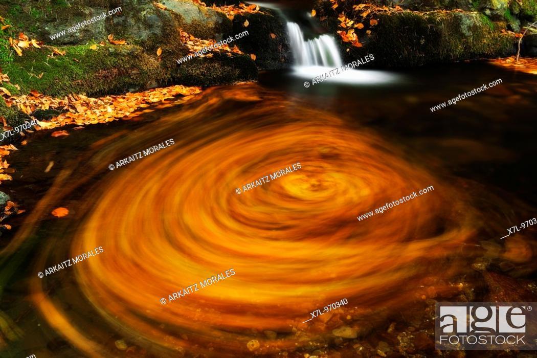 Stock Photo: circunferencia de hojas.