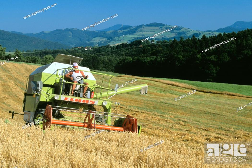 Stock Photo: Harvesting wheat crop in rural Niederosterreich Austria.