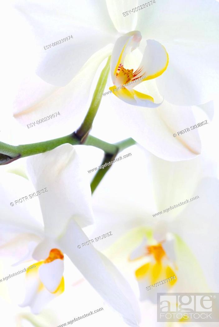 Photo de stock: Orchid freshness.