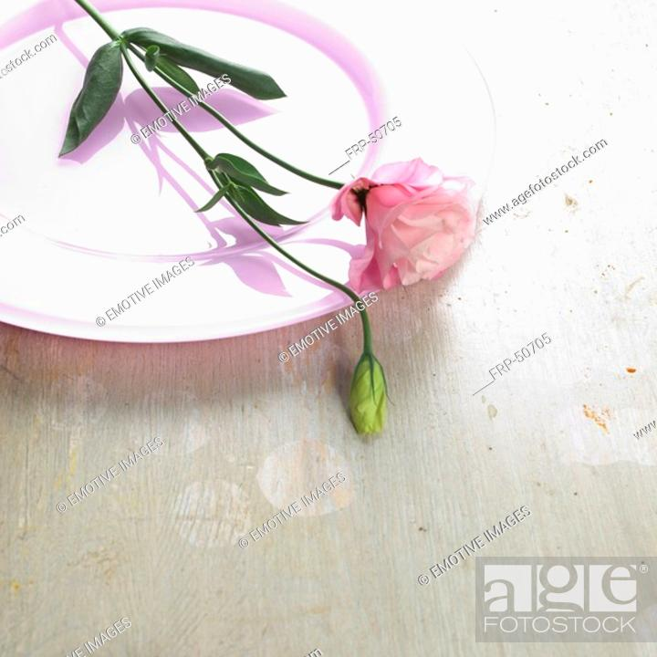 Stock Photo: Eustoma blossom on a pink plate.