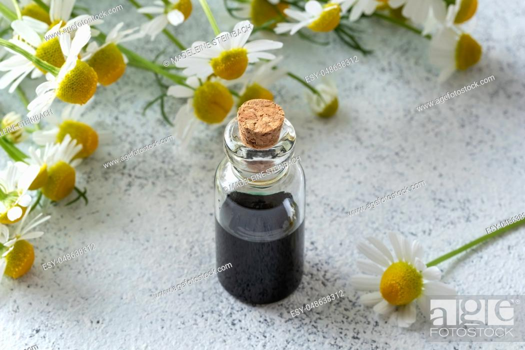 Stock Photo: A bottle of dark blue German chamomile essential oil and fresh flowers on a bright background.