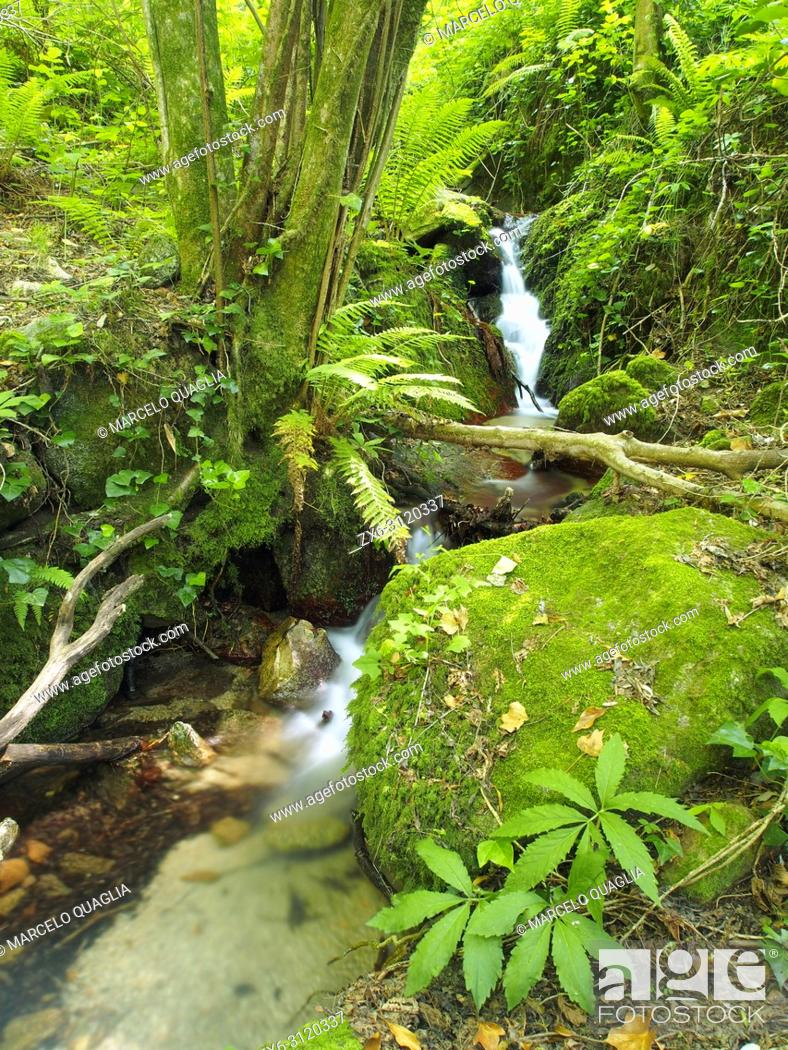 Stock Photo: Sot de L'Infern small stream at Arbucies village countryside. Montseny Natural Park. Barcelona province, Catalonia, Spain.