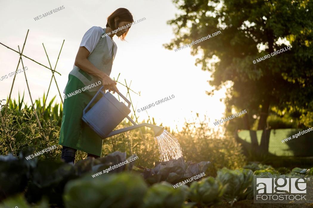 Stock Photo: Woman watering vegetable garden.