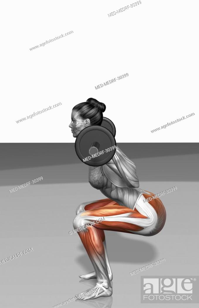 Stock Photo: Barbell squat exercises Part 1 of 2.
