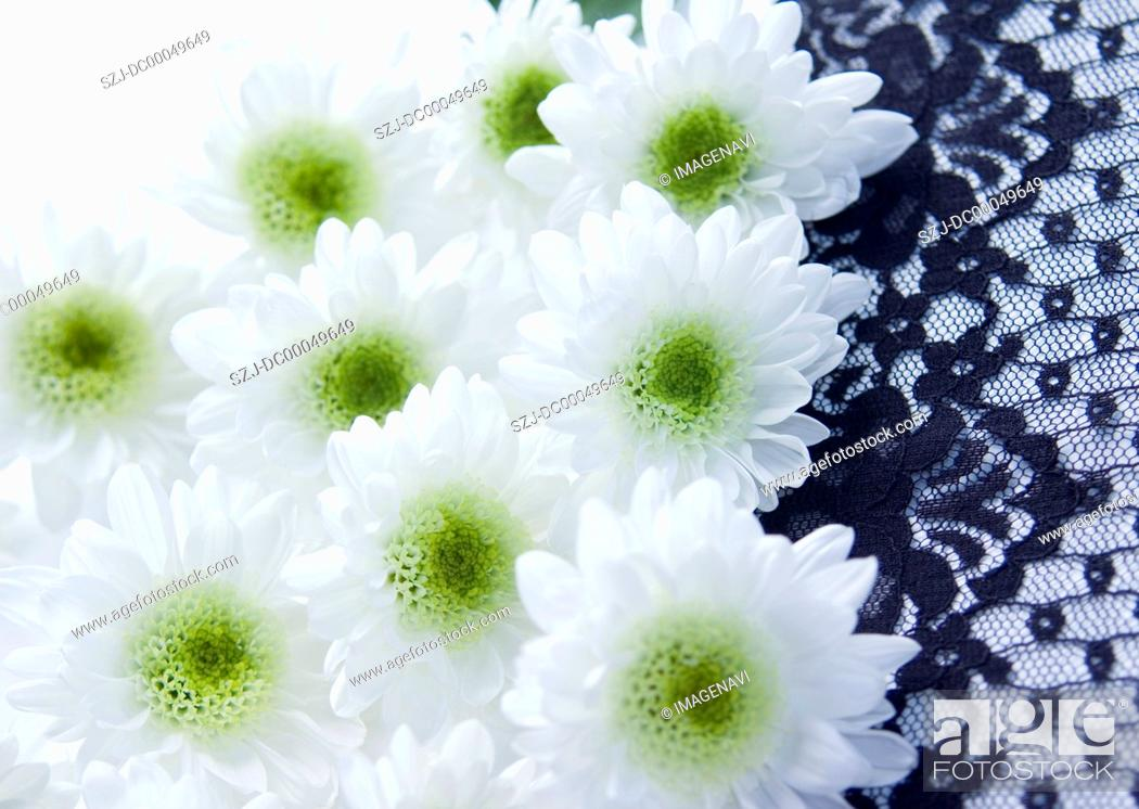 Stock Photo: Spray mums and lace Mourning image.