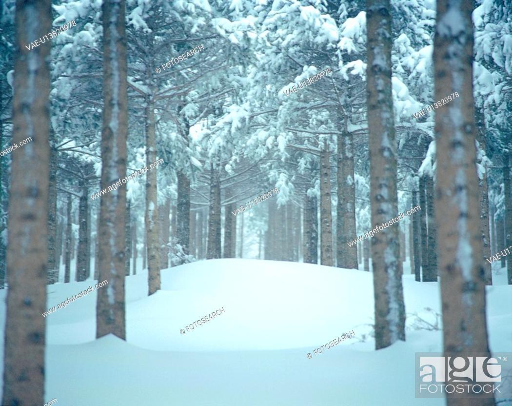 Stock Photo: snow, scenery, winter, tree, road, park, nature.