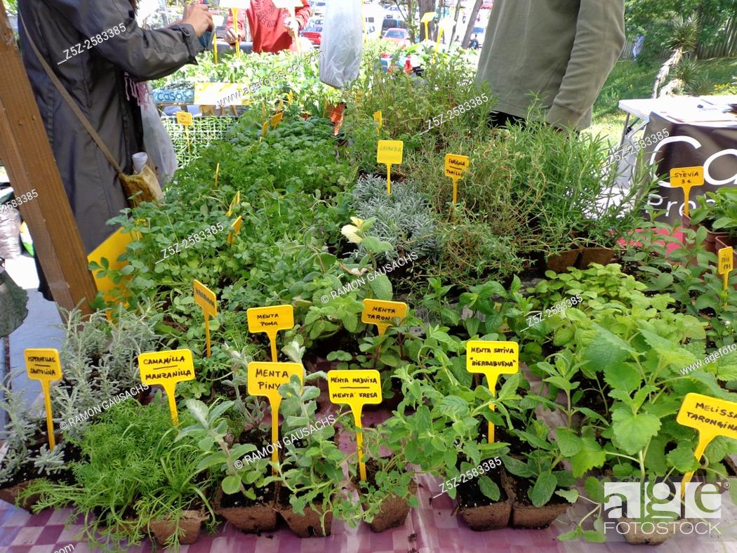 Stock Photo: Medicinal plants.