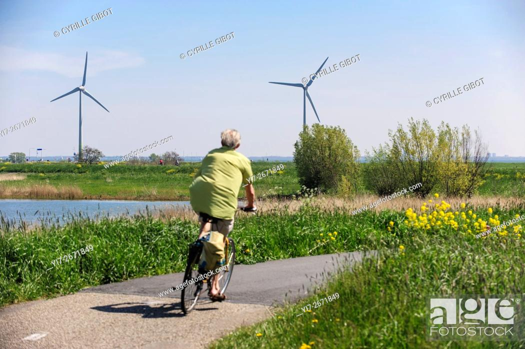 Stock Photo: Mature man cycling in the countryside against background of wind turbines, North Holland, the Netherlands.