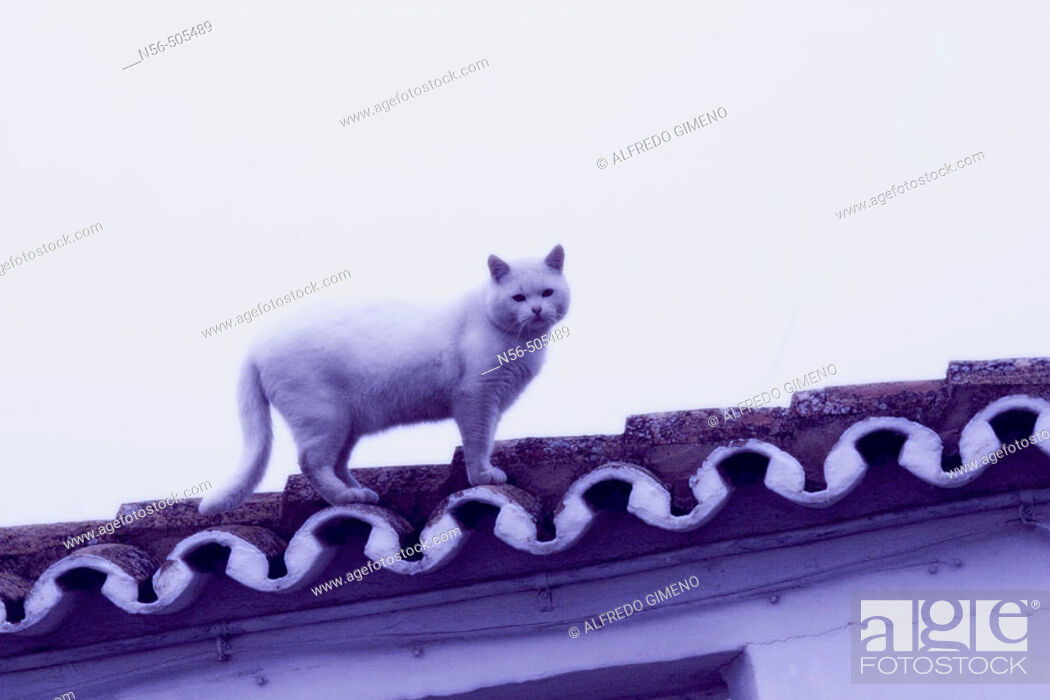Stock Photo: Cat on the roof.