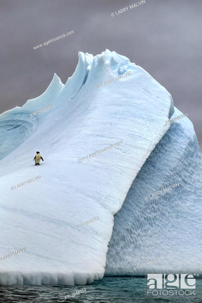 Imagen: Adélie penguin standing on a steep, angular iceberg in Antarctica.
