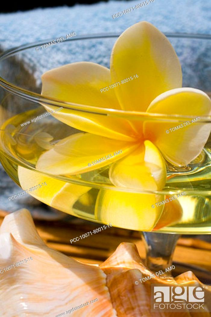 Stock Photo: Spa elements, glass with yellow plumeria floating in liquid, with seashell and towel.