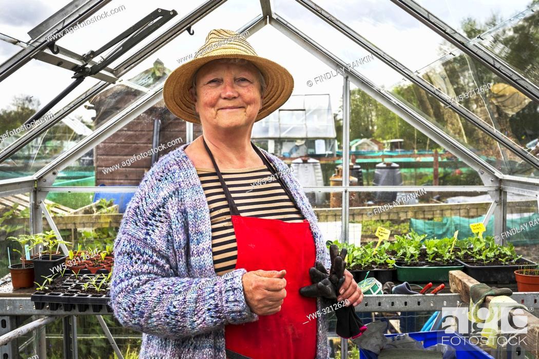 Imagen: Image of Janette Hudson, plot 34, Eglinton Growers, Eglinton gardens, Kilwinning, Eglinton Growers Allotments, Kilwinning, Ayrshire, Scotland, UK.