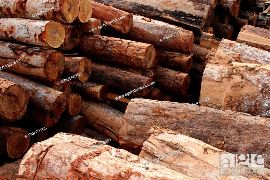 Stock Photo: Pile of wood logs in a legal sawmill, Rio Branco Acre, Brasil, 2011.