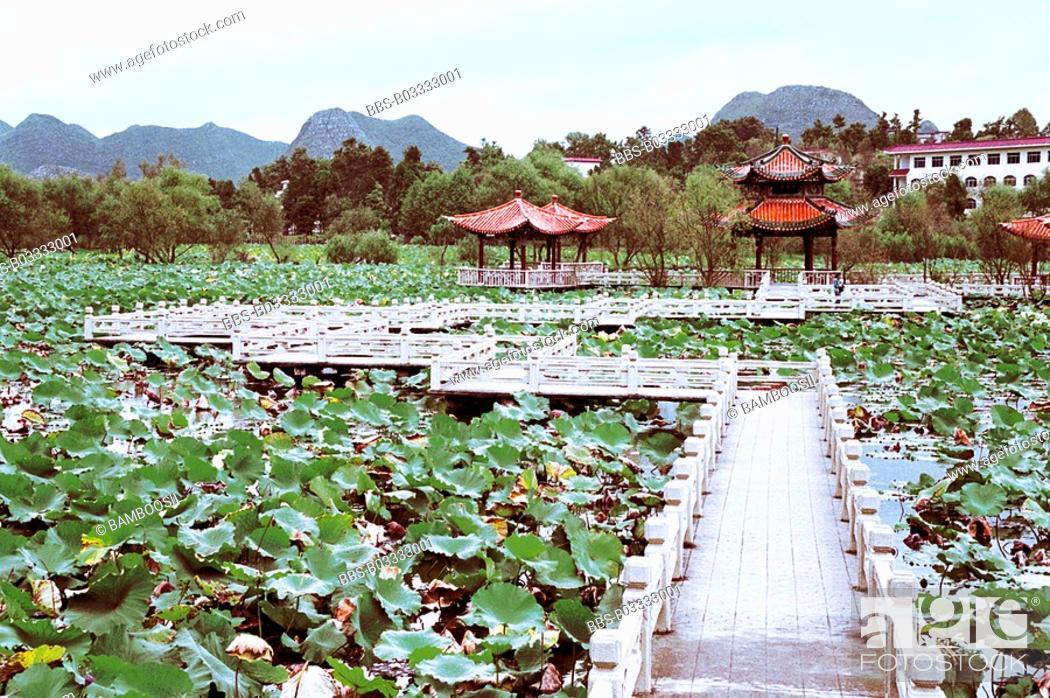 Imagen: Scenery of lotus flower garden in Zhaodi, Anlong County, Guizhou Province of People's Republic of China.
