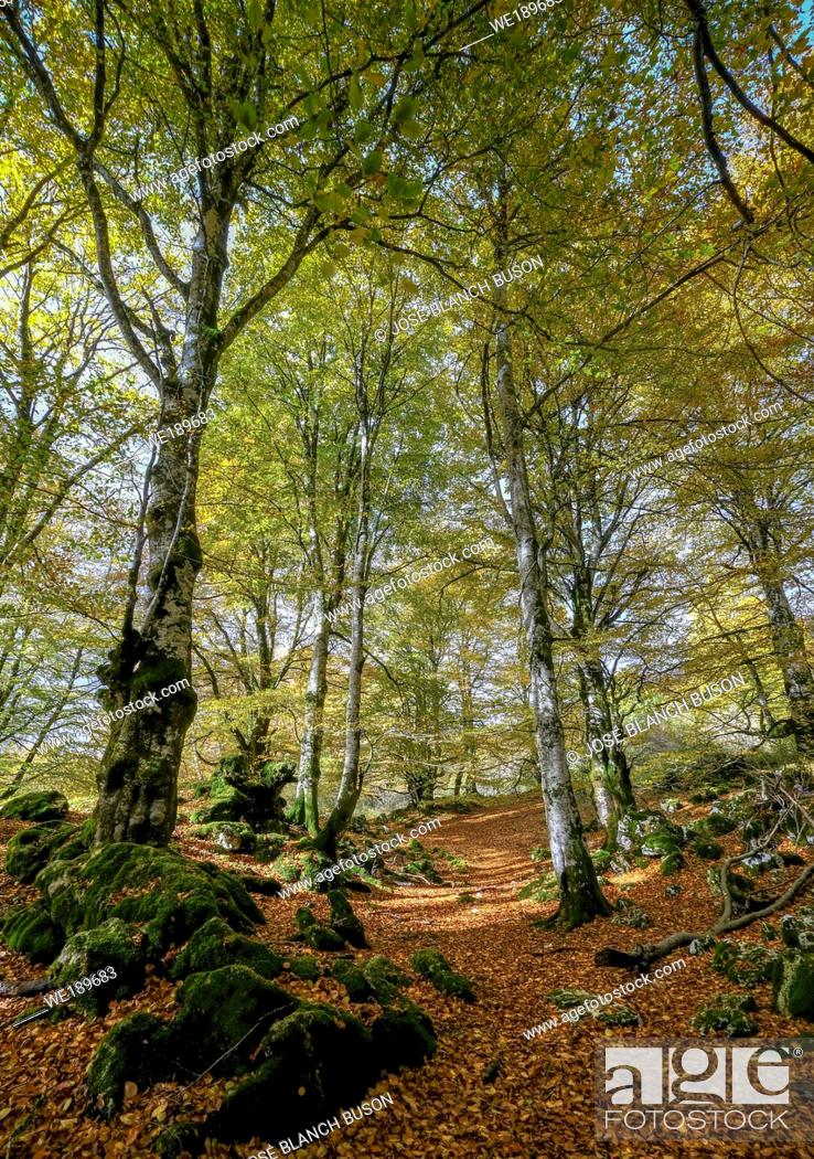 Stock Photo: Nature photography. Image corresponding to the Urbasa Natural Park, in Navarra in the autumn season, which stands out for its textures and colors.
