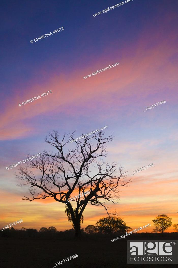 Stock Photo: Beautiful sky after sunset in the Pantanal, Mato Grosso, Brazil.