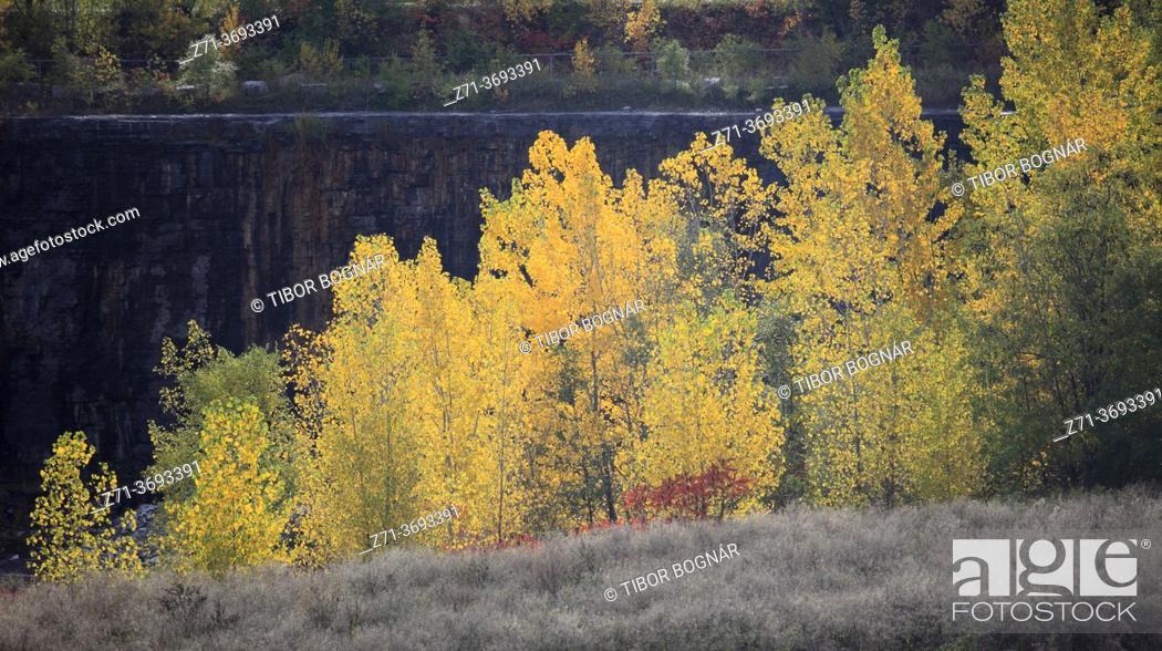 Stock Photo: Canada, Quebec, Montreal, Parc Frédéric-Back, autumn colors, .