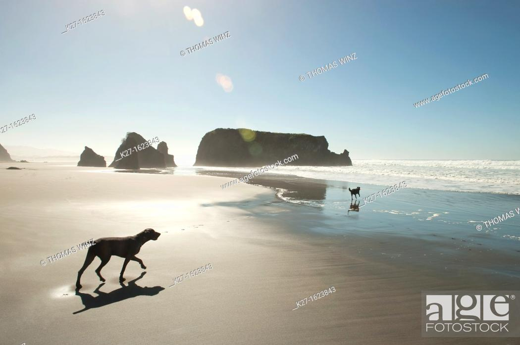 Stock Photo: Two dogs on a beach north of Fort Bragg, California, USA.