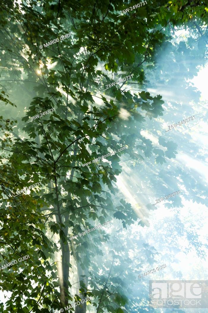 Stock Photo: The effects that make the sun's rays at dawn in the woods.