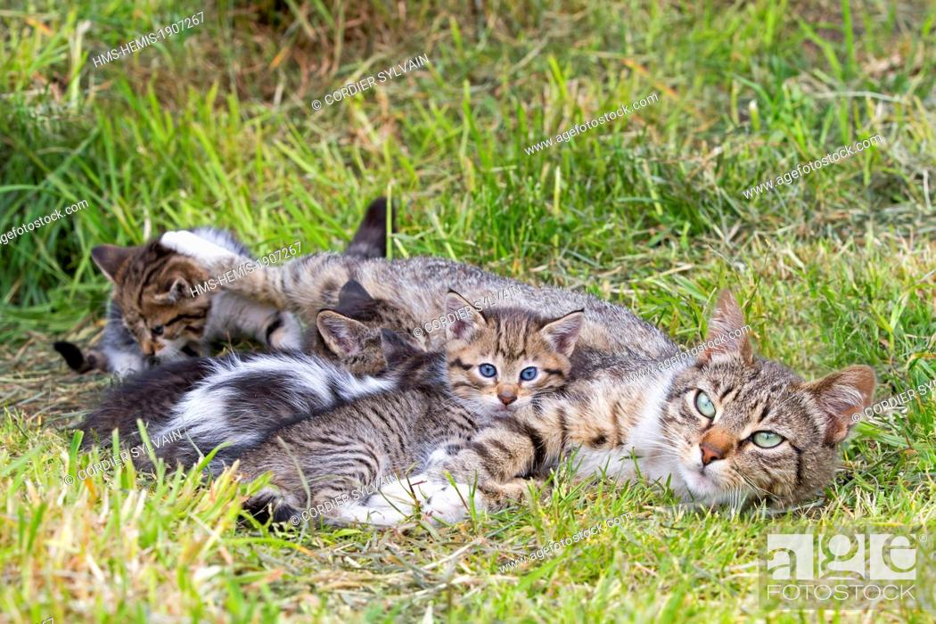 Imagen: Chile, Patagonia, Magellan Region, Torres del Paine National Park, domestic cat, mother and youngs.