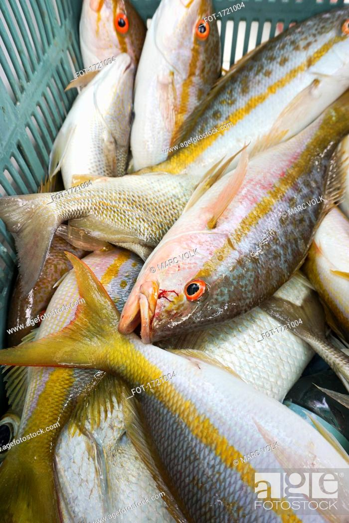 Imagen: High angle view of fish in basket.