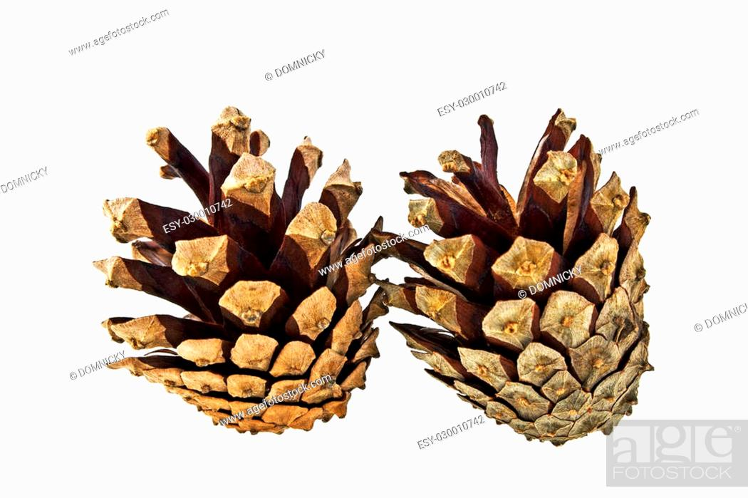 Stock Photo: Pine cones isolated on white background.