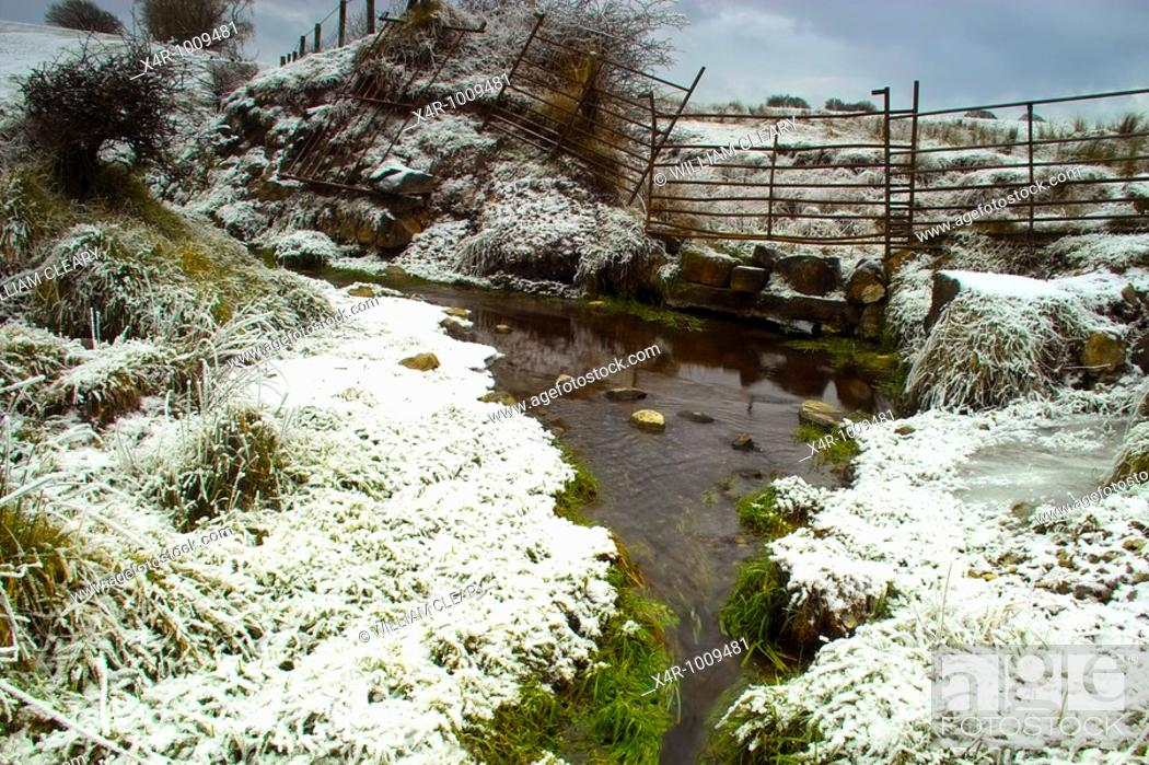 Stock Photo: Greenery protruding from the snow by the banks of a small stream.