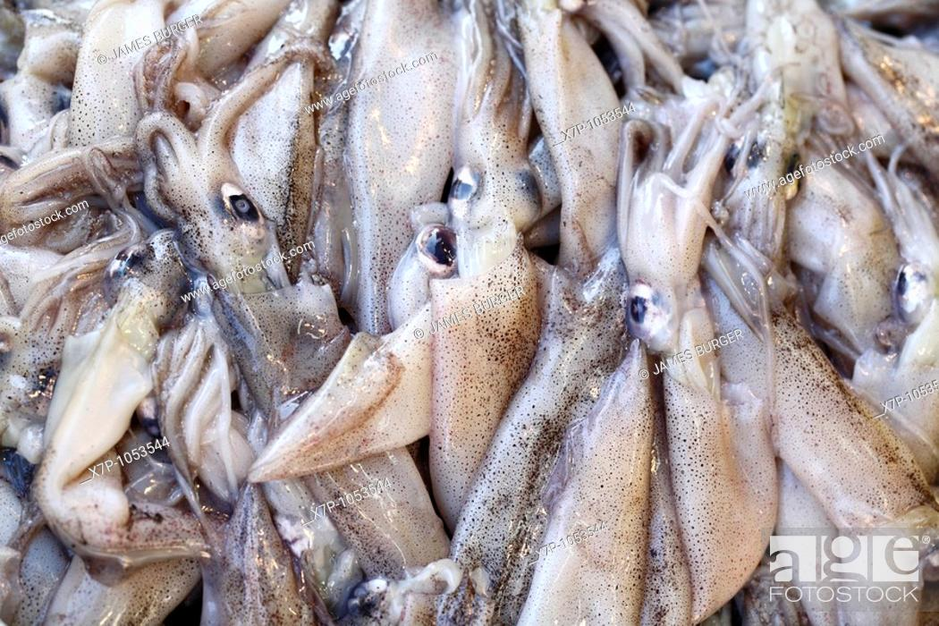 Photo de stock: Close up of fresh squid.