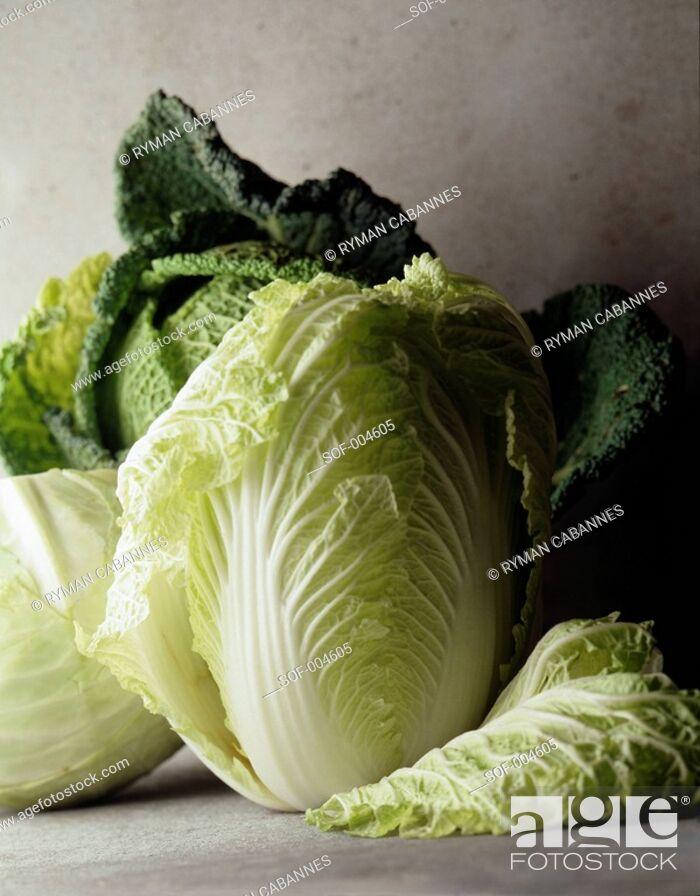 Stock Photo: chinese cabbage.
