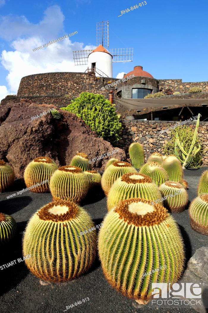 Stock Photo: Jardin de Cactus Cactus Garden, Guatiza, Lanzarote, Canary Islands, Spain.