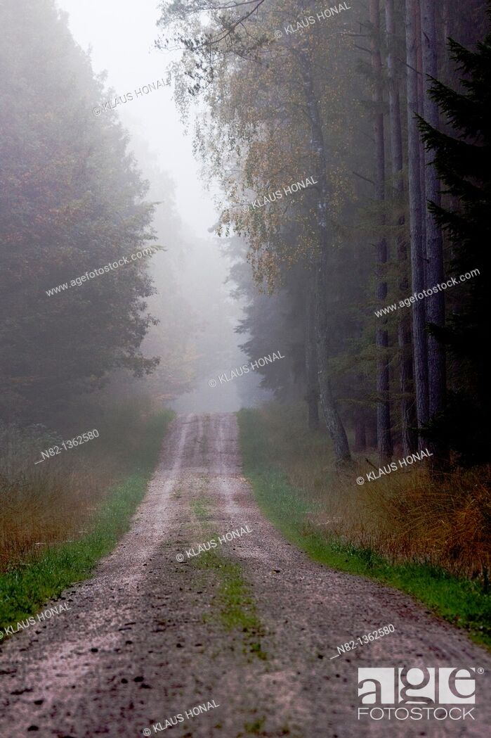 Stock Photo: Forest trail in fog - Bavaria/Germany.