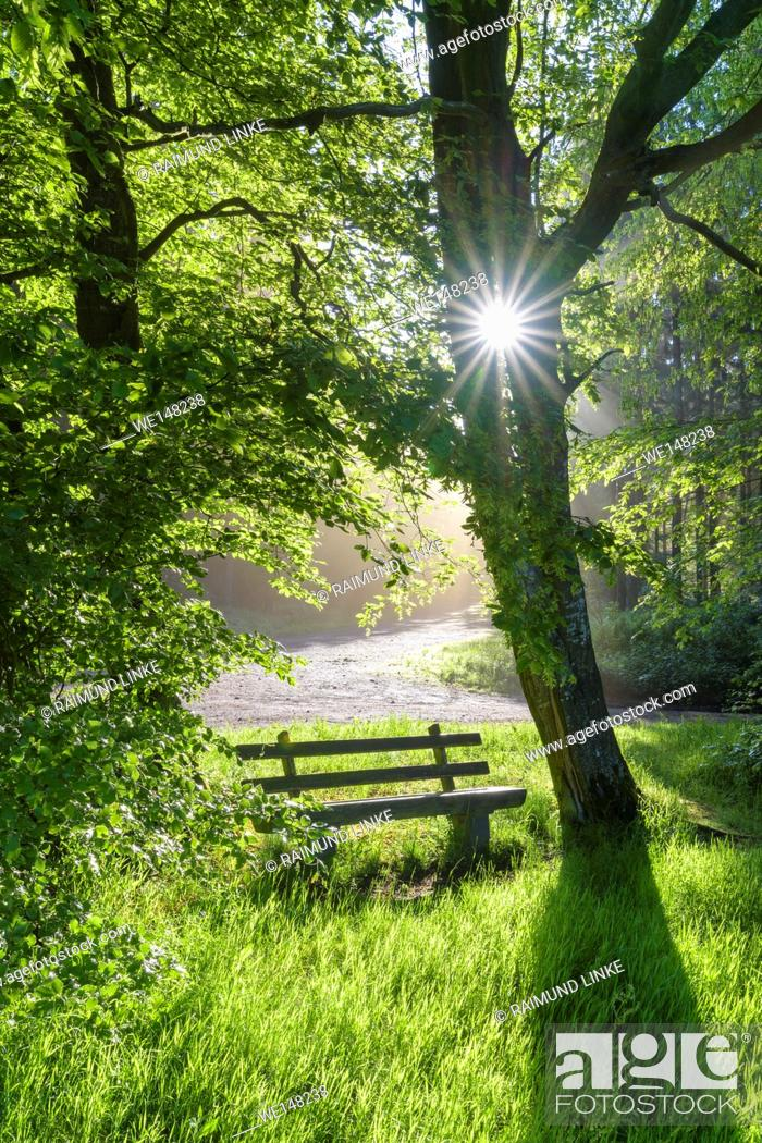 Stock Photo: Bench in forest with sun, spring, Vielbrunn, Odenwald, Hesse, Germany.