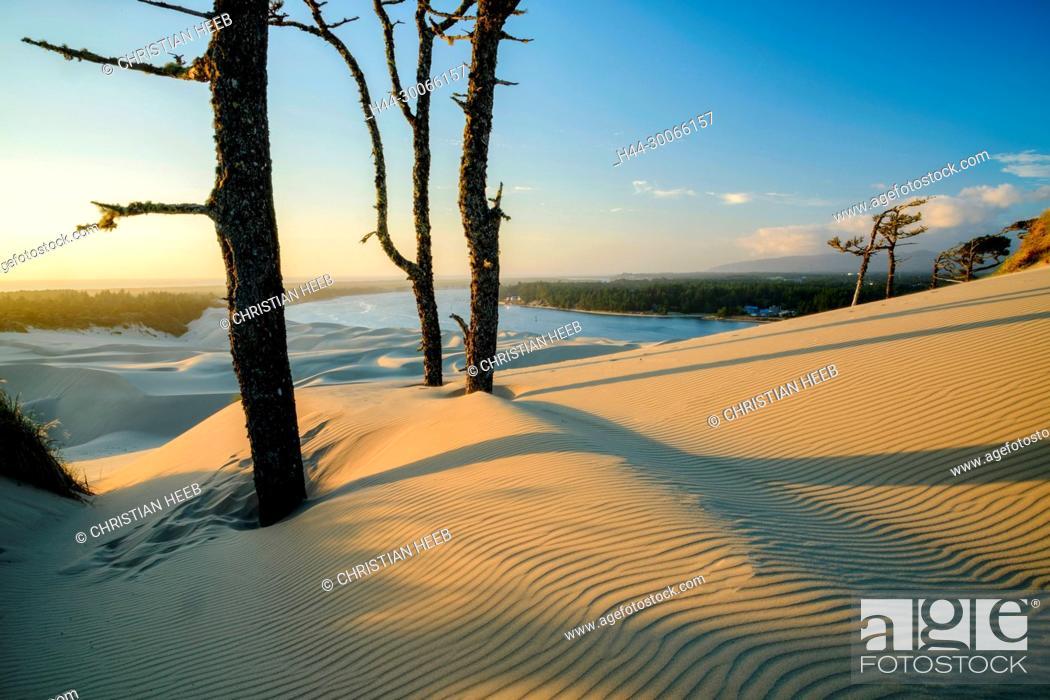 Stock Photo: North America, American, Pacific Northwest, Oregon, Oregon Coast, Oregon Dunes National Recreation Area.